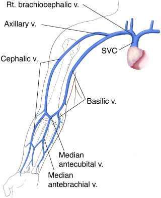 Picc line anatomy